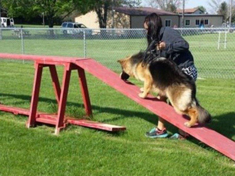 Dog Training Union Grove Racine WI